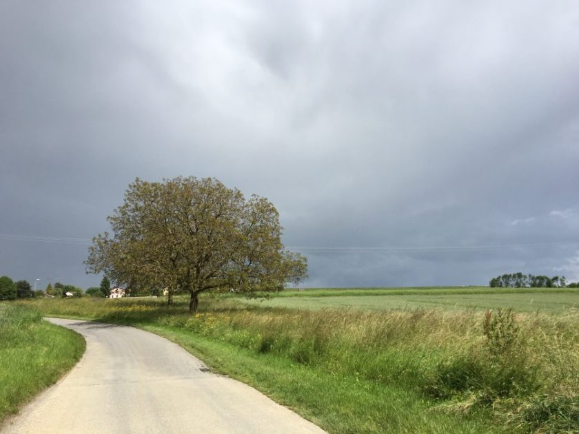 Threatening storm and lonely tree
