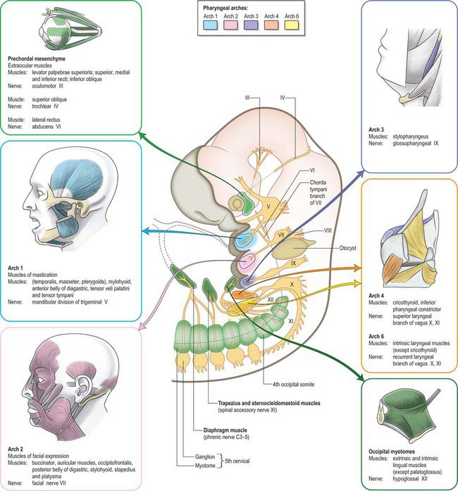 Development of the head and neck Clinical Gate
