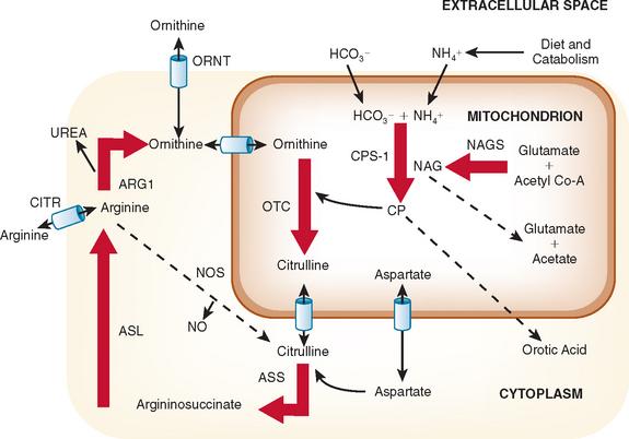 UREA CYCLE DISORDERS Clinical Gate - urea cycle