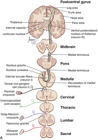 Pain in Spine Disease Clinical Gate - spinothalamic tract