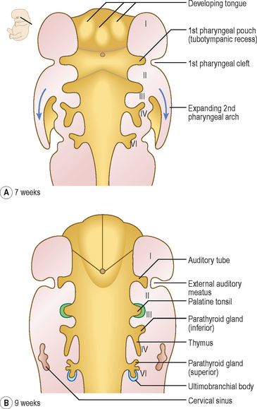 Development of the head and neck, the eye and ear Clinical Gate