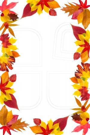 Fall Leaves Wallpaper Border Free Fall Borders Download Free Clip Art Free Clip Art