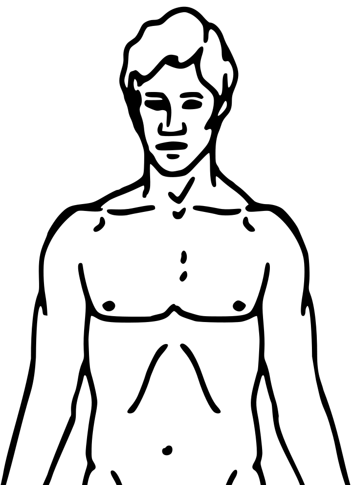 diagram of human torso