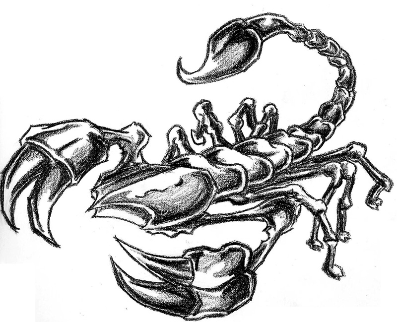 scorpion drawing tattoo artists org