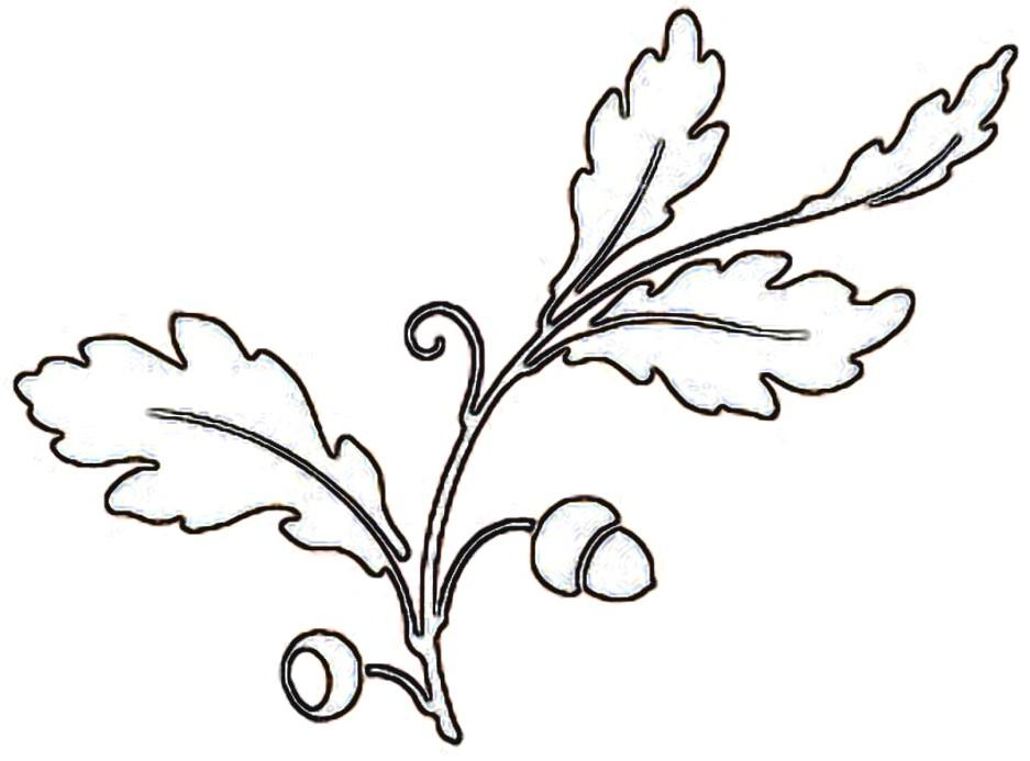 Free Oak Leaf Outline, Download Free Clip Art, Free Clip Art on