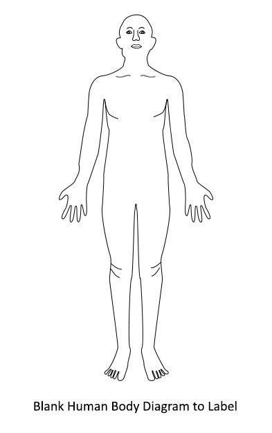 human body diagram human body diagram