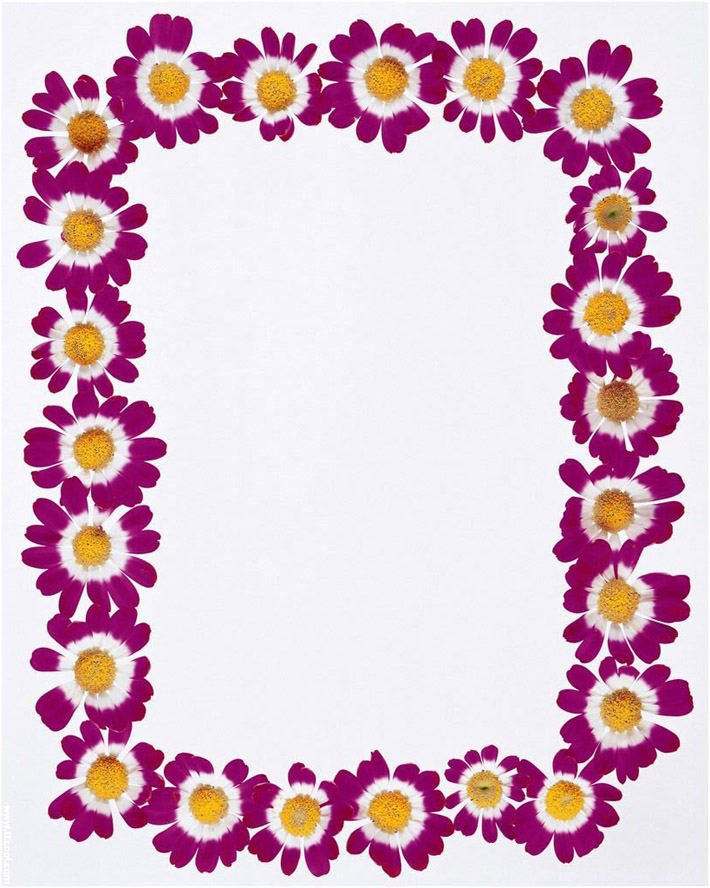 Purple Flowers Frame Borders Design 2014 -Page Border Designs - Clip