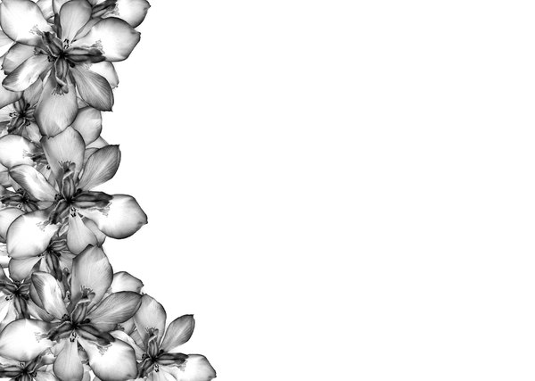 Free Beautiful Borders For Projects On Paper, Download Free Clip Art