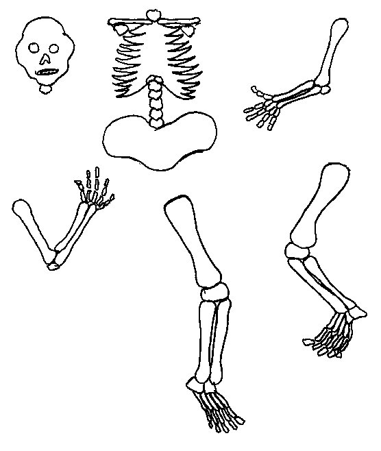 Free Skeleton Picture For Kids, Download Free Clip Art, Free Clip