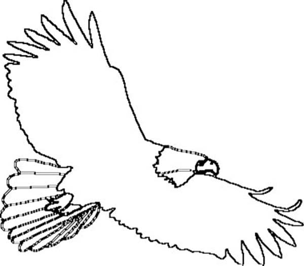 Eagle pattern Use the printable outline for crafts, creating - Clip