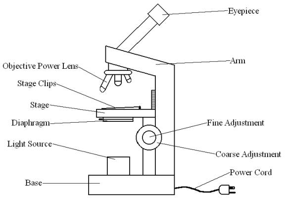 all saints online diagram for labelling microscope