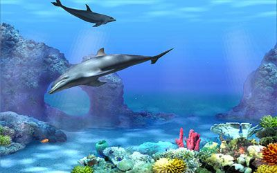Zedge 3d Moving And Live Wallpapers Free Animated Dolphin Download Free Clip Art Free Clip