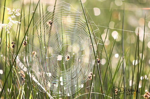 Free Spiders Web Download Free Clip Art Free Clip Art On