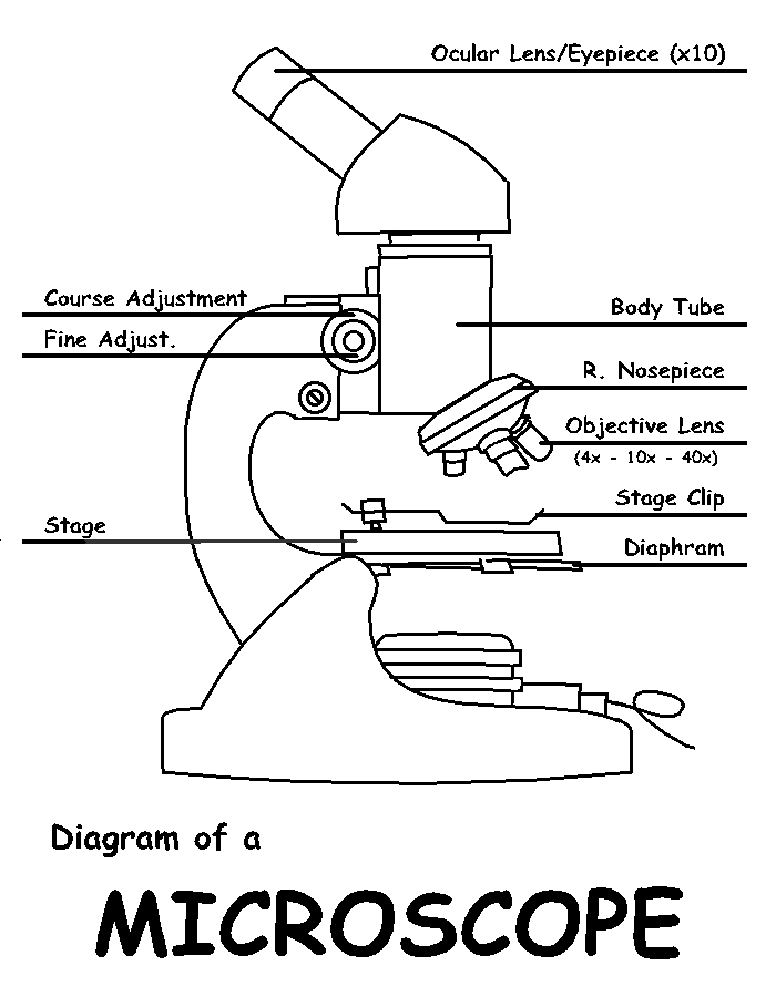 blank microscope diagram optics binoculars