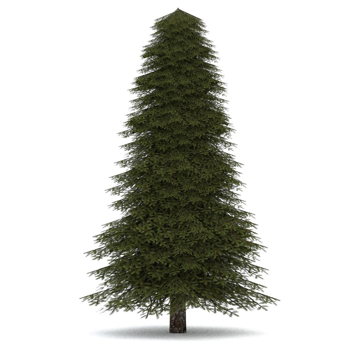 Cute Wallpaper Recycling 3d Realistic Fir Tree 2