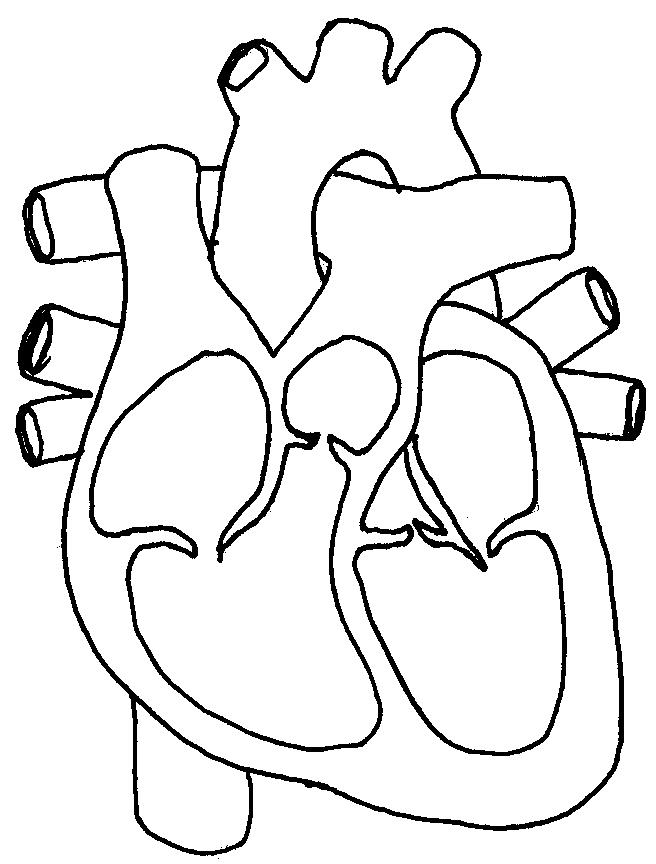 Free Unlabelled Diagram Of The Heart, Download Free Clip Art, Free