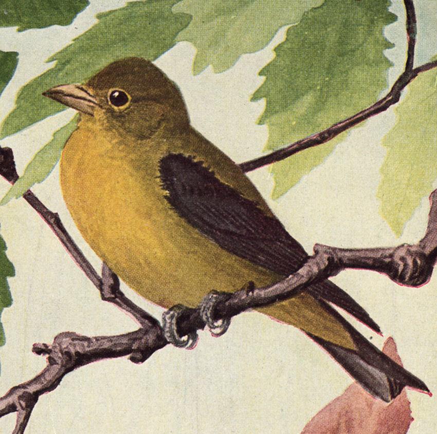 Free Bird Print Cliparts, Download Free Clip Art, Free Clip Art on