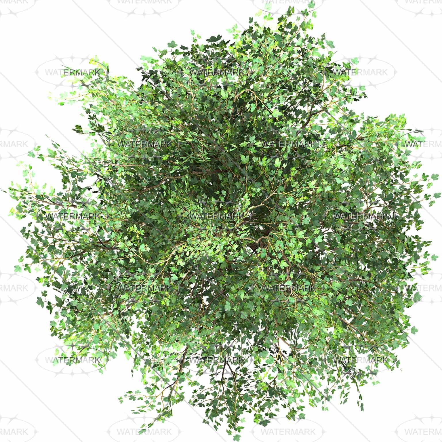 Free Shrub Top View Png Download Free Clip Art Free Clip Art On Clipart Library