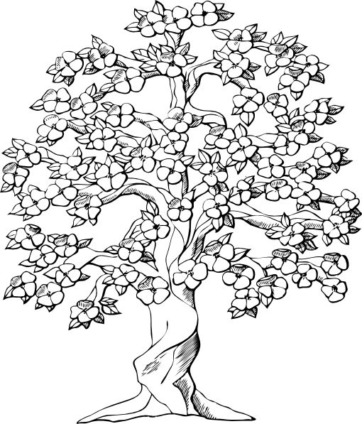 Free Family Tree Clipart, Download Free Clip Art, Free Clip Art on