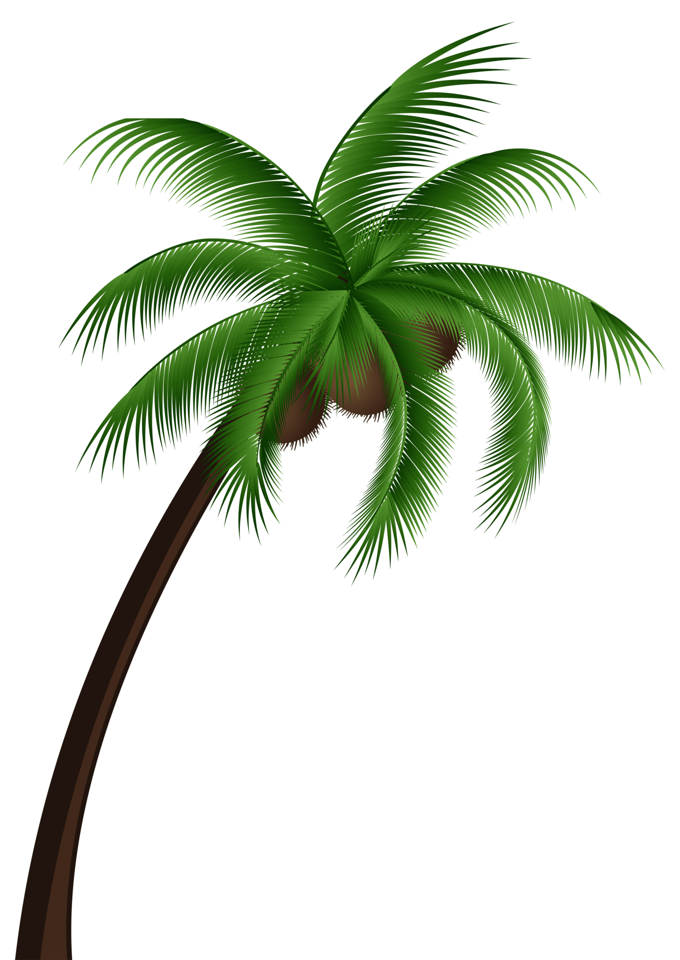 Palm Tree Top View Png Coconut Palm Tree Png Clip Art
