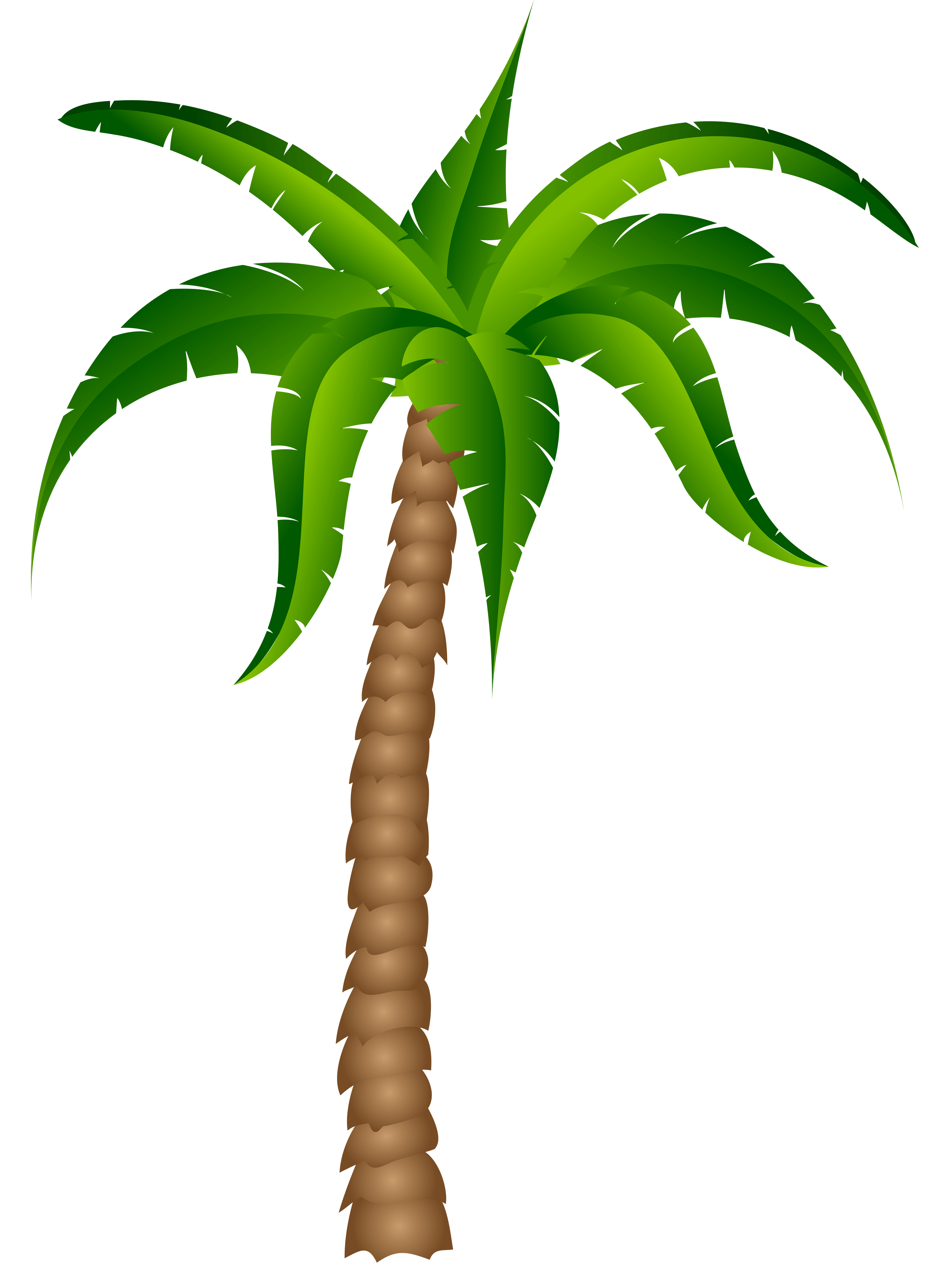 Palm Tree Top View Png Palm Tree Transparent Picture Png M1419211933 Clipart