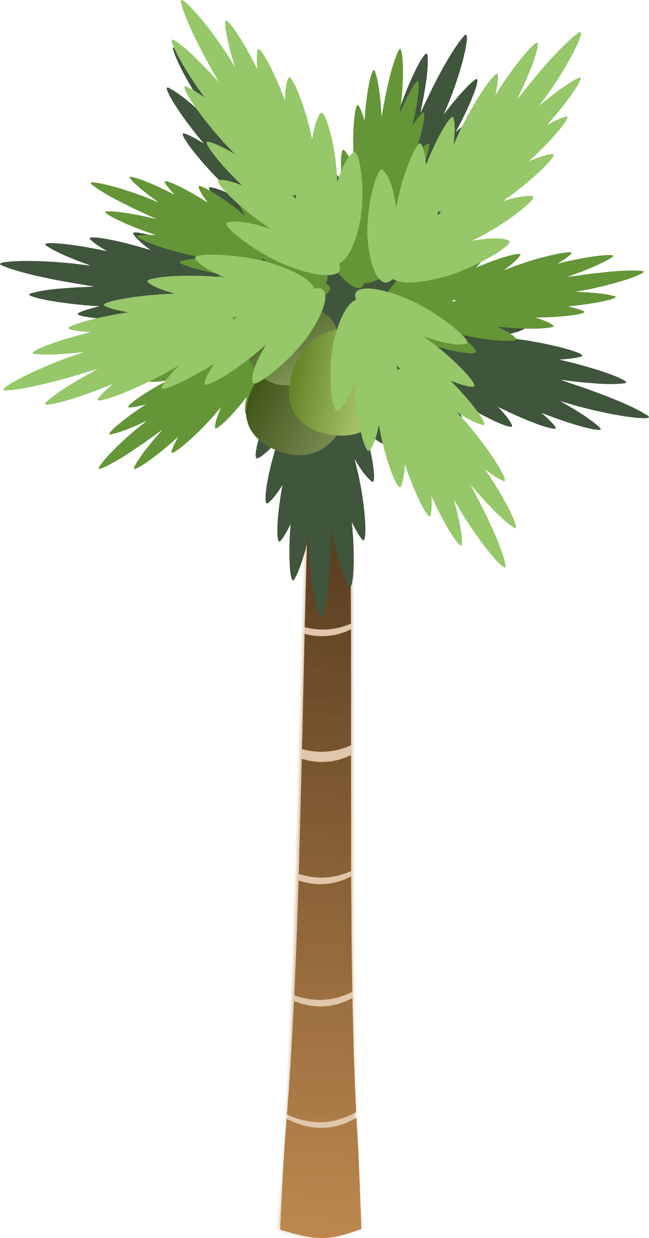 Palm Tree Top View Png Palm Tree Png Clipart Best