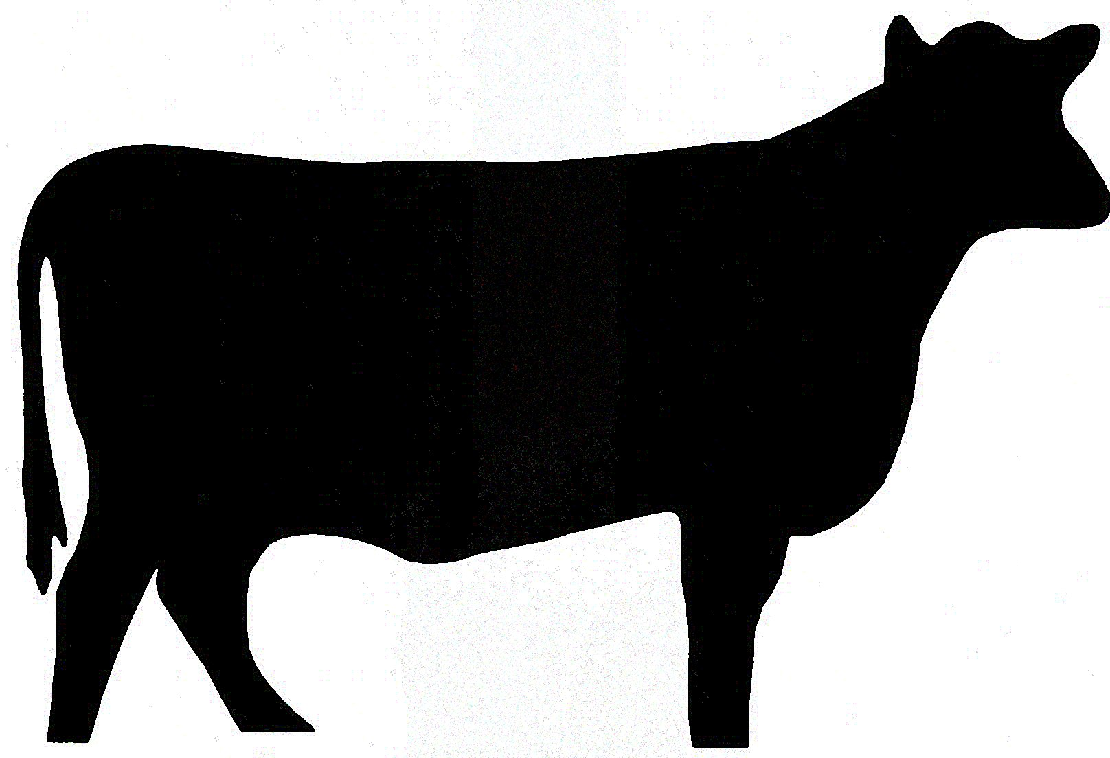 Steer Stencil Cow Silhouette Clipart Best