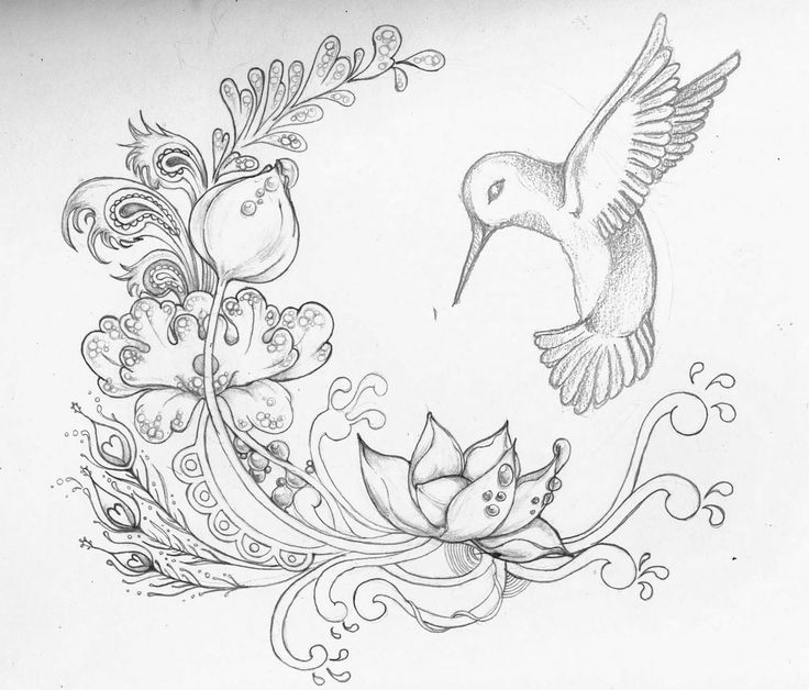 flower drawing Drawn sparrow lotus flower pencil and inlor drawn jpg