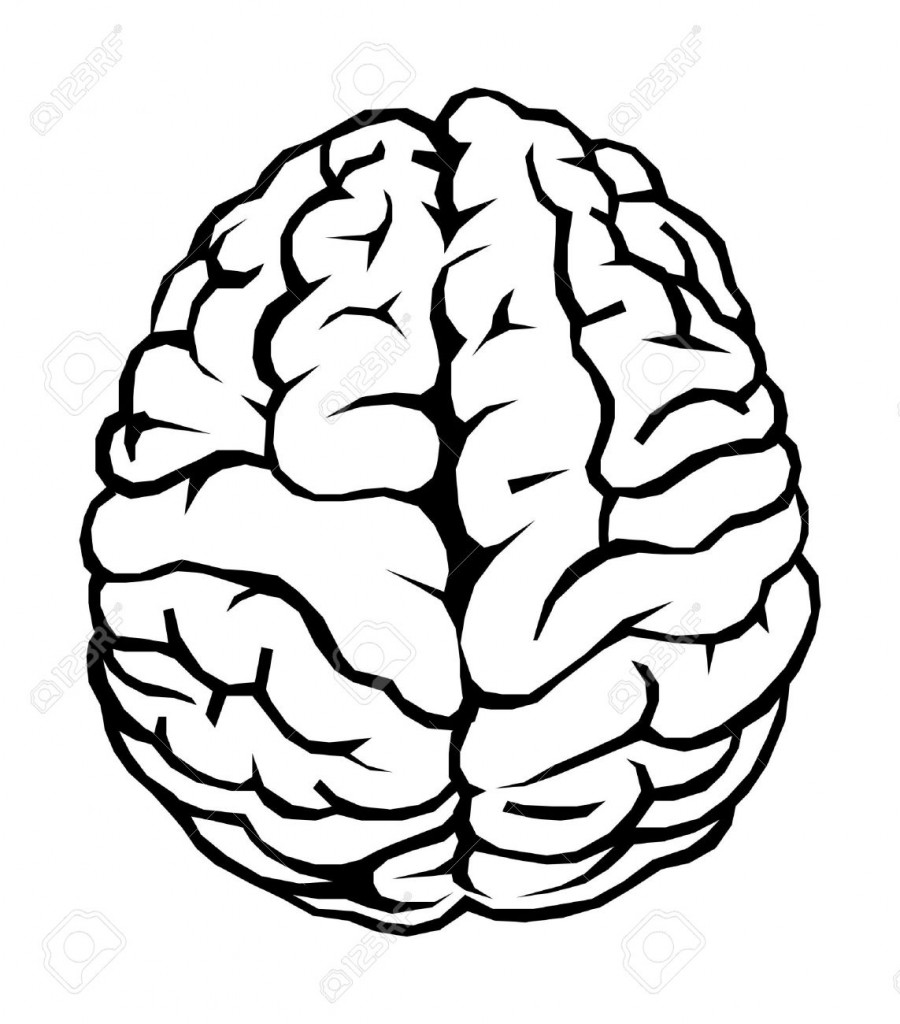simple brain diagram clipart best