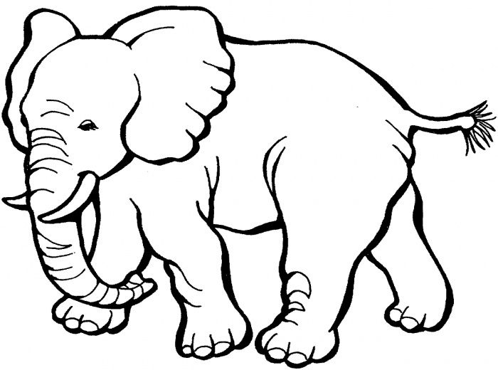 Animal Clipart To Color Free download best Animal Clipart To Color
