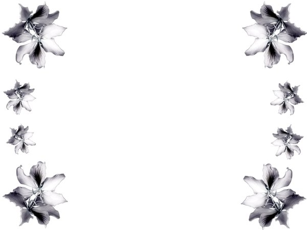 Paper Border Designs Flowers Black And White - Flowers Healthy