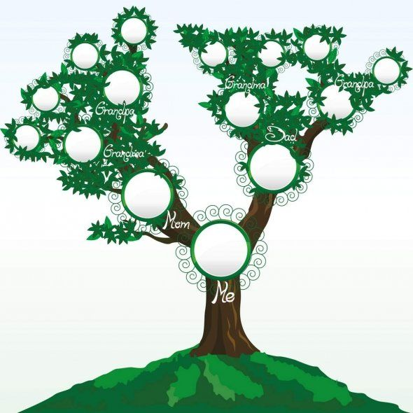 Collection of Family tree clipart Free download best Family tree