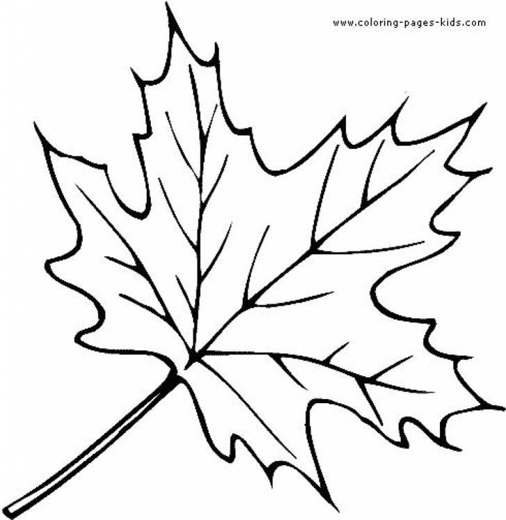 Oak Leaves Outline Free download best Oak Leaves Outline on