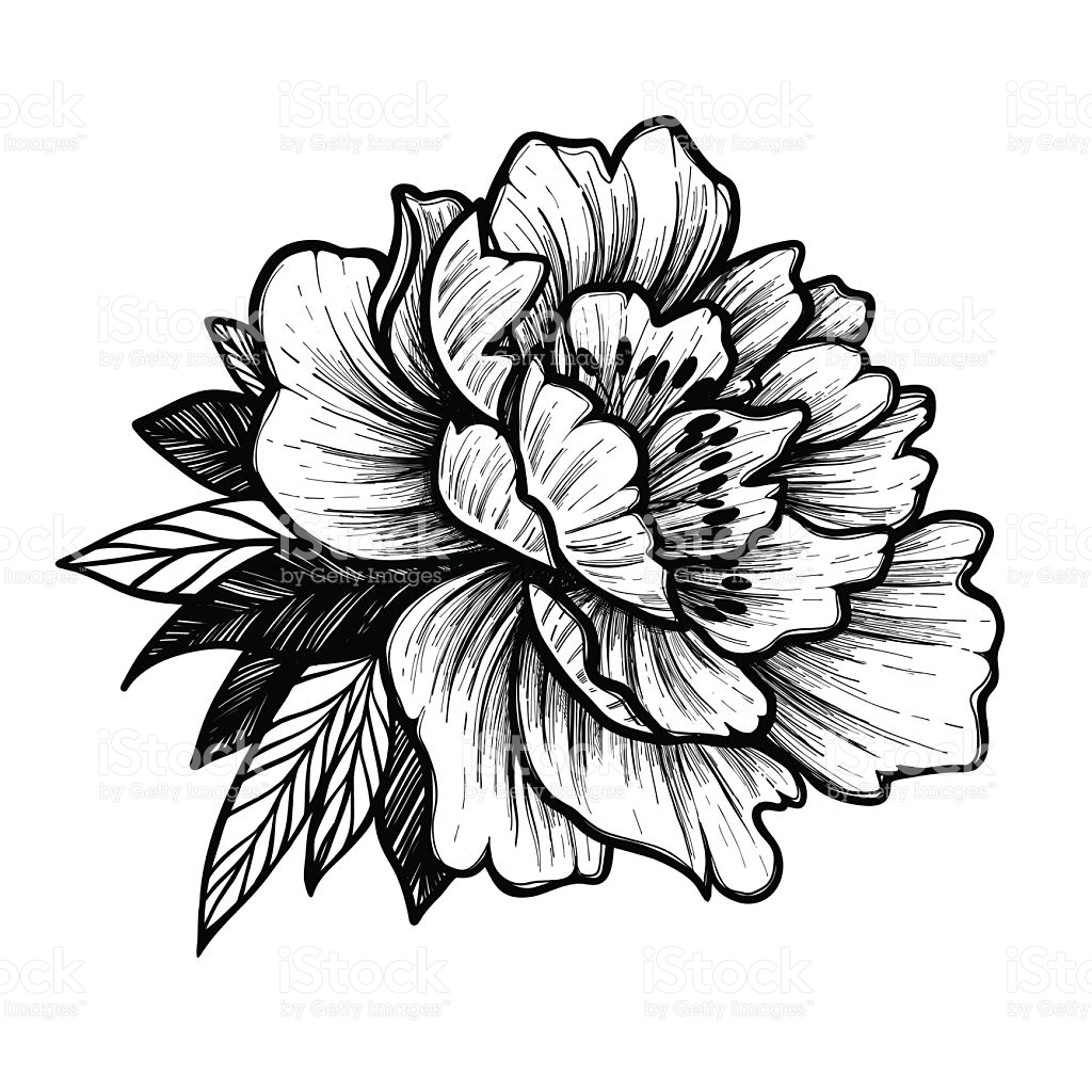 Arte Floral Vetor Peony Clipart Free Download Best Peony Clipart On Clipartmag