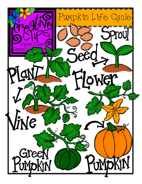 Pumpkin Life Cycle Clipart Free download best Pumpkin Life Cycle