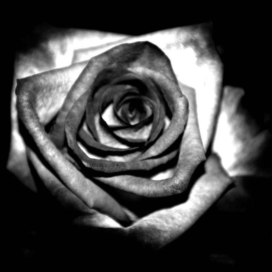 Black Keys Wallpaper Black And White Rose Cliparts Co