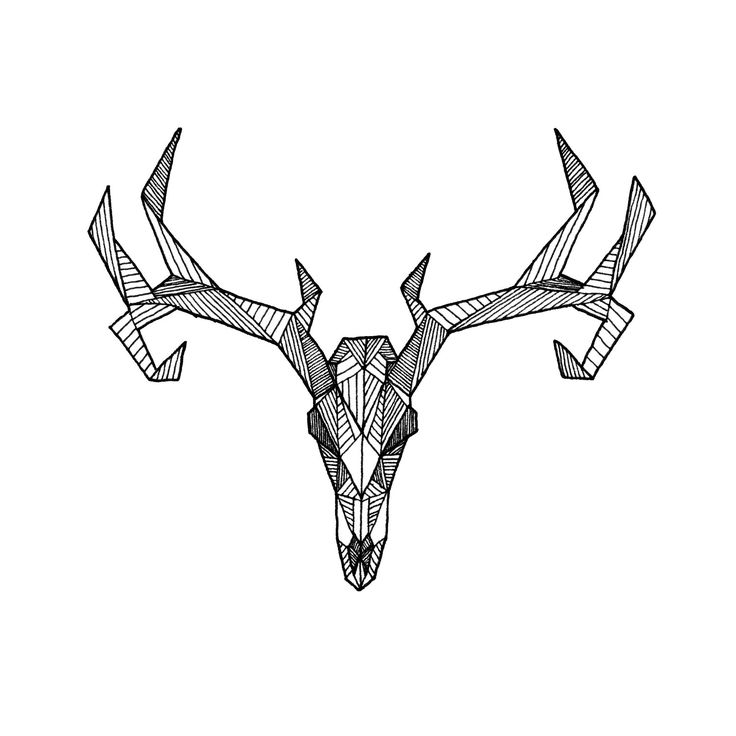 Drawings Of Deer Skulls - Cliparts