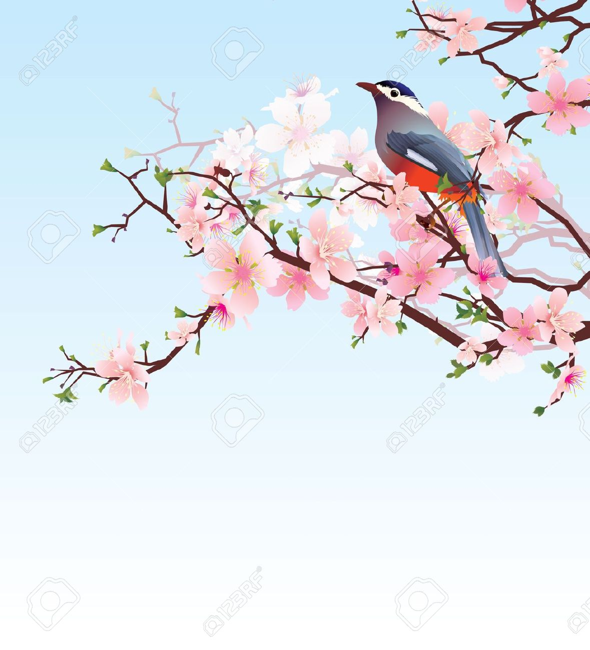 Action Raamfolie Beautiful Cherry Blossom Clipart Clipground