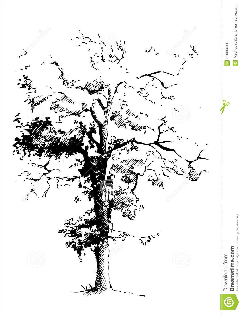 Revolutionary War Clipart Black And White Auto Electrical Wiring York Millennium Schematics Y14 Poplar Leaf