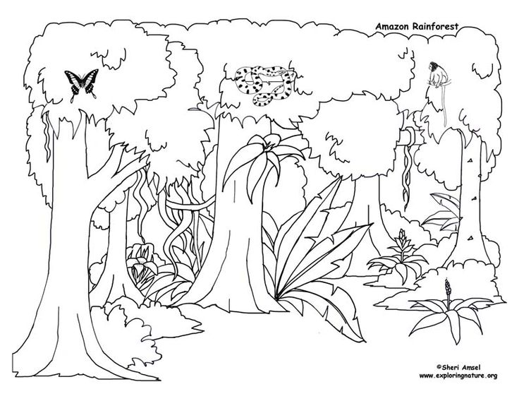 diagram of rainforest plant for children