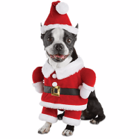 Dress Up Your Pet Dog in Christmas Costumes From PETCO