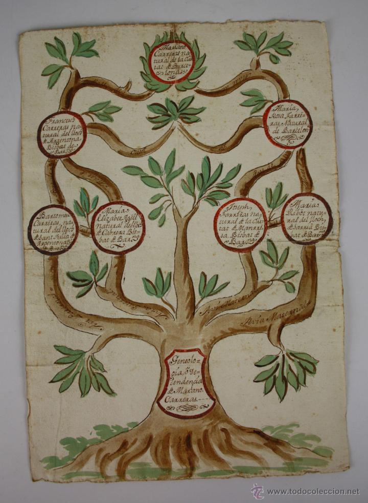 árbol genealógico - ciudad de barcelona - dibuj - Comprar Dibujos