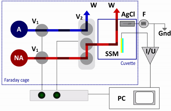 Introduction to Solid Supported Membrane Based Electrophysiology