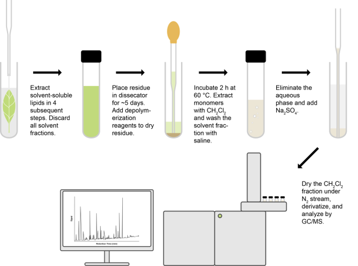 Isolation and Compositional Analysis of Plant Cuticle Lipid