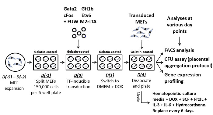Reprogramming Mouse Embryonic Fibroblasts with Transcription Factors