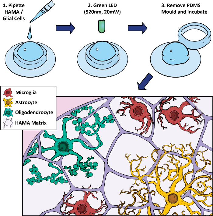 Improved 3D Hydrogel Cultures of Primary Glial Cells for In Vitro