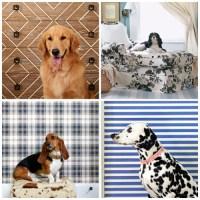 Dog Friendly Decorating Ideas - Pet Friendly Living Room ...