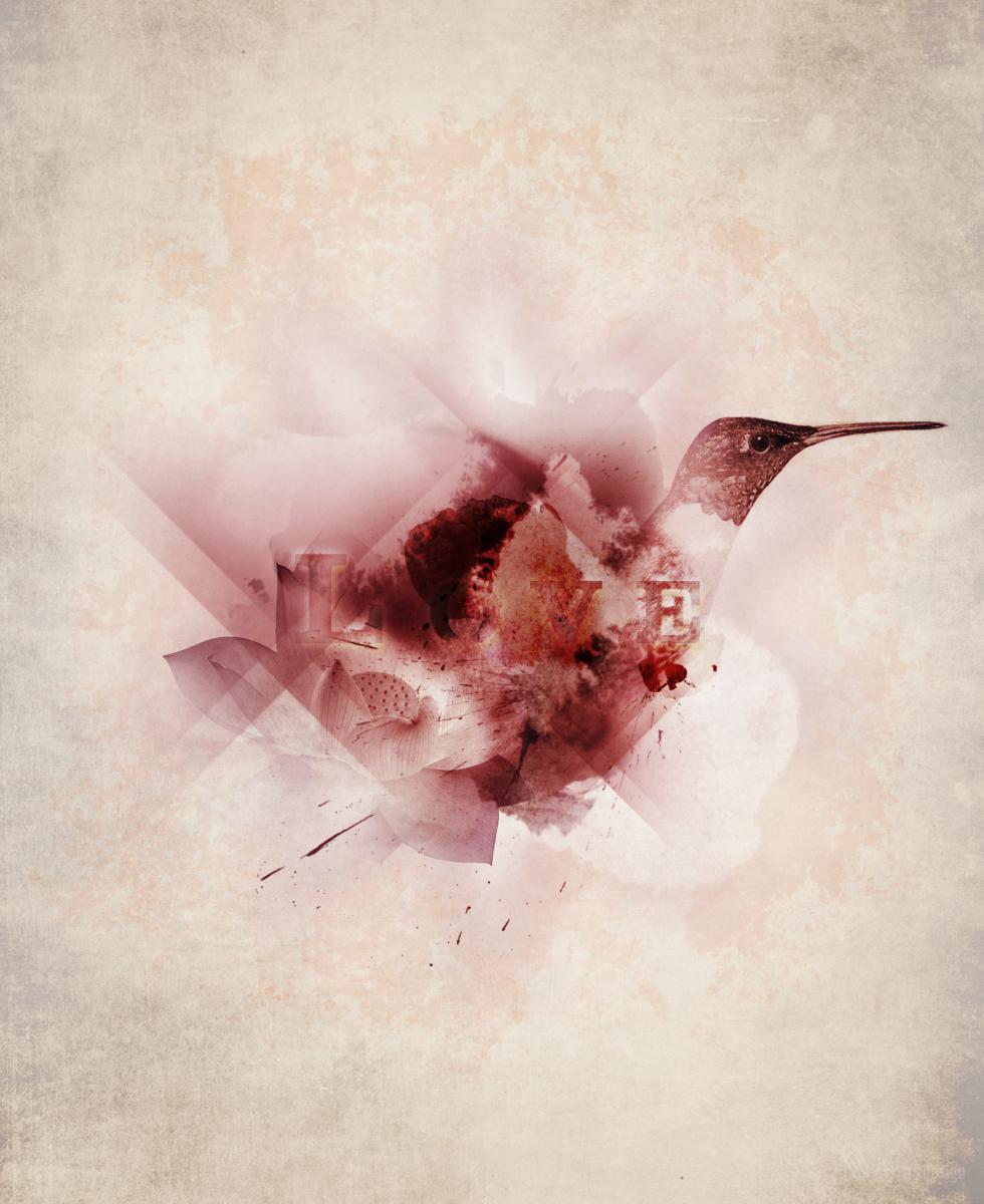 lovebird_o