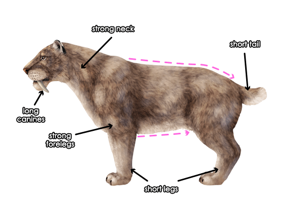 How To Draw Animals The Great Extinct Mammals