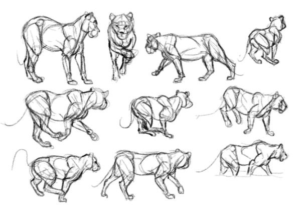 How to Learn to Draw Stage Three, Visual Database